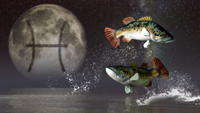 Photo of Celebrating Two Fishes: Pisces Season